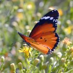 Sept_14_Butterflies__1013A